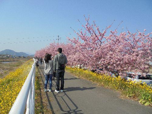blog-20160228桜まつり並木ー1.jpg