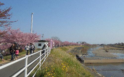 blog-20160228桜まつり並木ー2.jpg