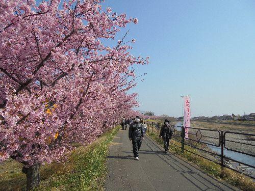 blog-20160228桜まつり並木ー3.jpg