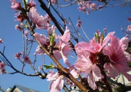 blog-momonohana.jpg