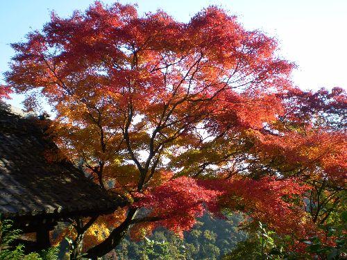 kyoto-okuarasiyama2010-2.jpg