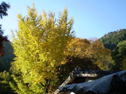 kyoto-okuarasiyama2010-3.jpg