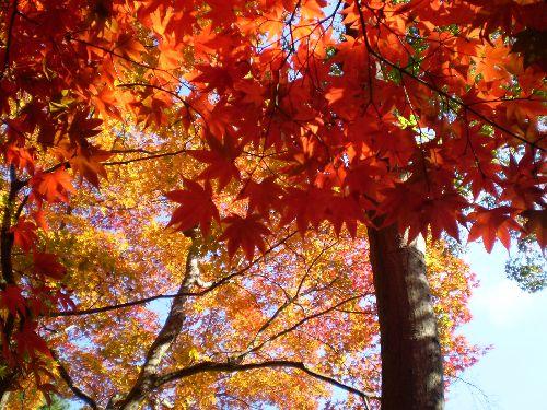 kyoto-okuarasiyama2010-4.jpg