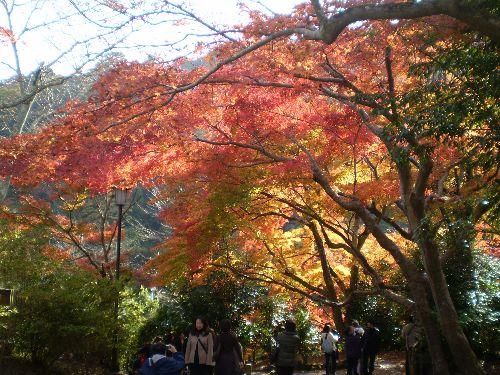 kyoto-okuarasiyama2010-5.jpg