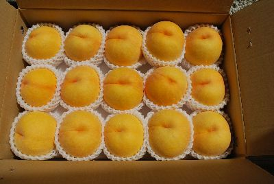 peach 2010.jpg 桜桃